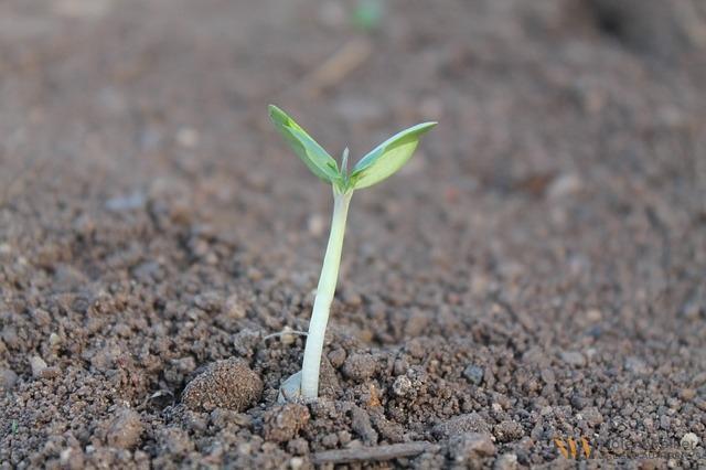 grow-259806_640
