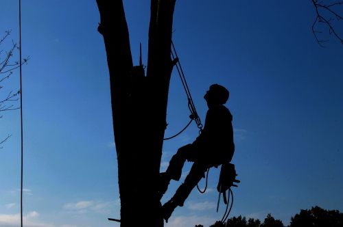 Tree Service Business Leads